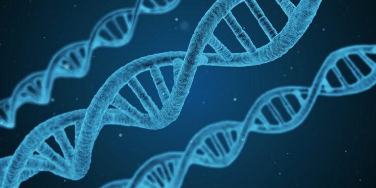 Geny w służbie sylwetki – przyszłość odżywiania i suplementacji dla sportowców!
