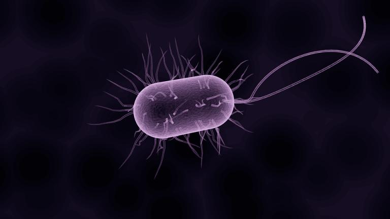 Jak prawidłowo dobrać probiotyki?