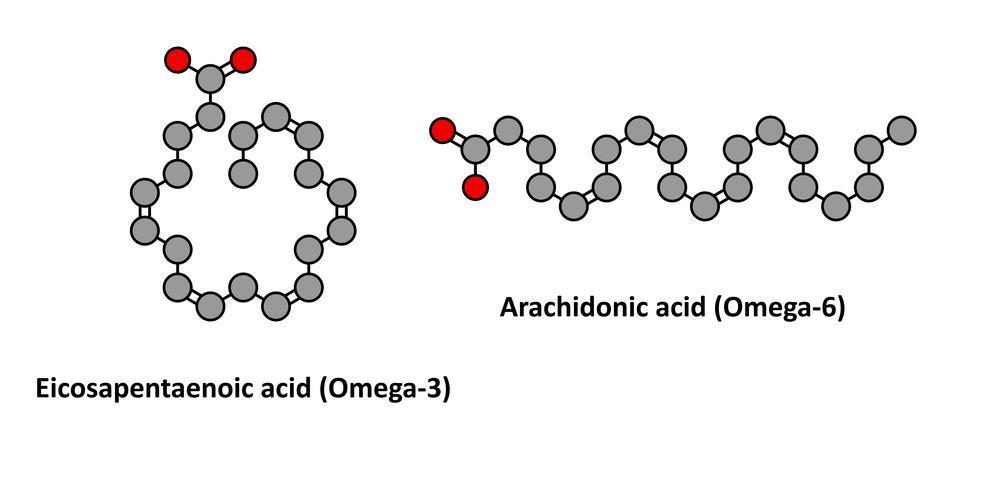 Kwasy EPA i DHA - podstawowe kwasy Omega 3