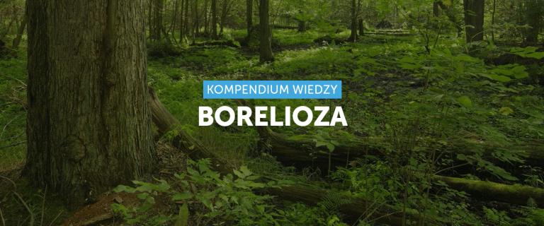 Borelioza – pomoc w leczeniu