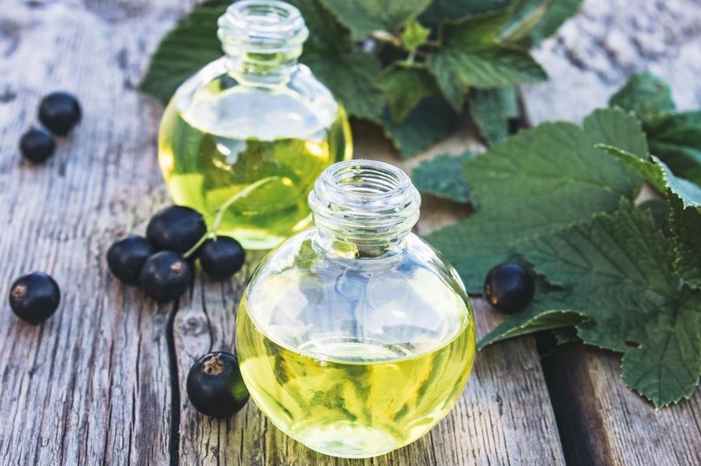 Świeży olej z czarnej porzeczki