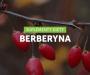 Porównanie najpopularniejszych suplementów z berberyną!