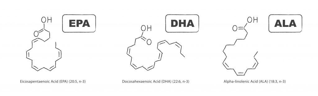 Kluczowe kwasy typu Omega 3 - EPA, DHA i ALA