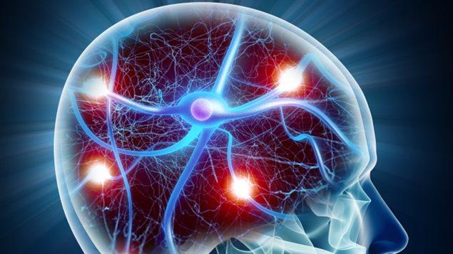 Źródła pokarmowe neurotransmiterów