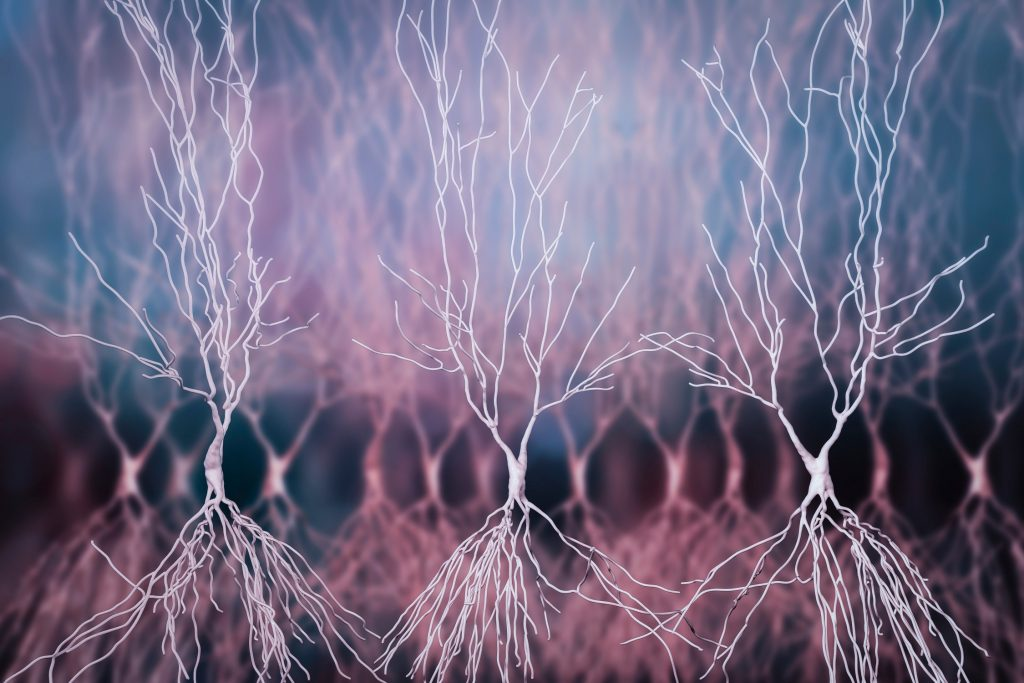 Jak wyglądają połączenia nerwowe?