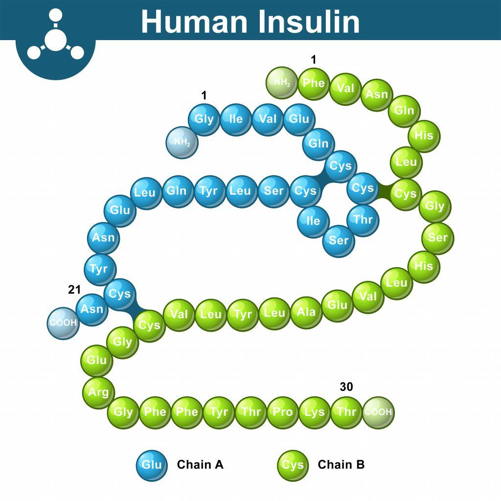 Jak wygląda insulina?
