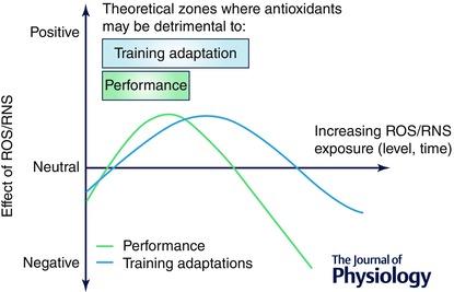 Antyoksydanty a adaptacja do treningu - wykres