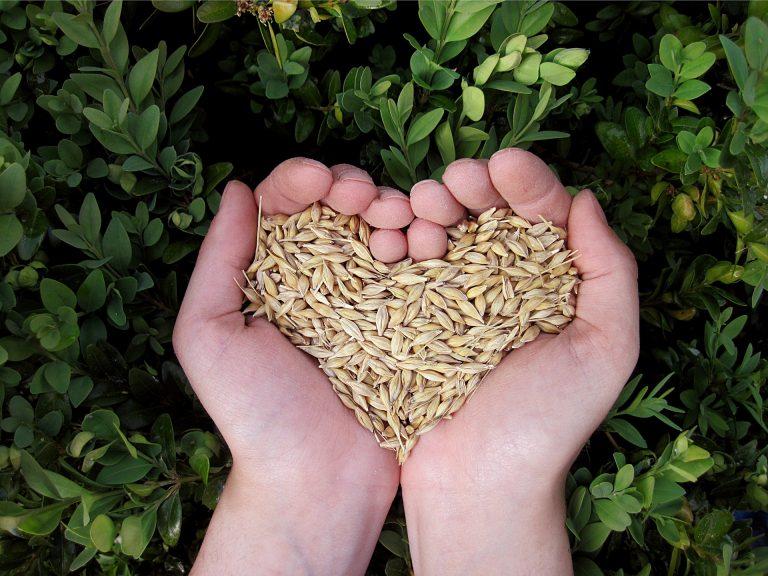Otręby pszenne – dlaczego warto je jeść?