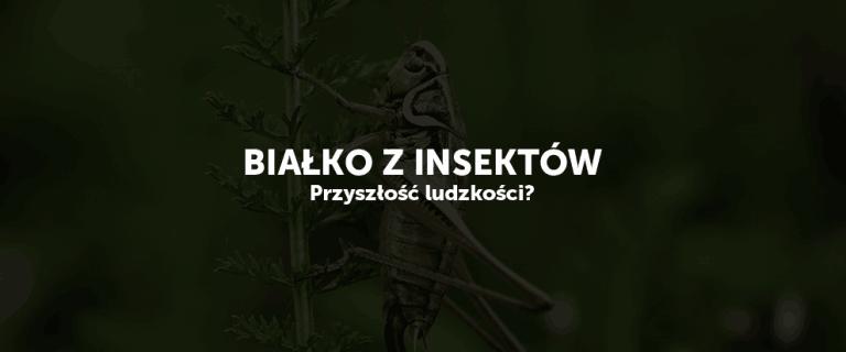 Białko z insektów – przyszłość ludzkości?
