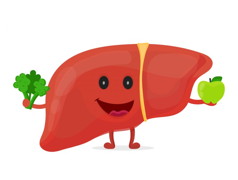 Strong healthy happy liver character with broccoli and apple. Vector flat cartoon illustration icon design. Isolated on white backgound. Digestive tract, Healthy food nutrition,liver concept