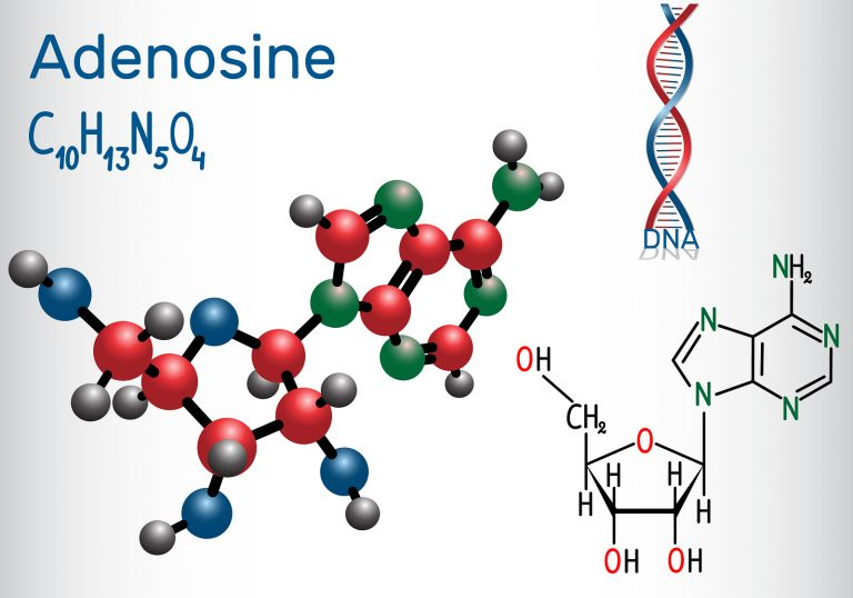 Adenosine - purine nucleoside molecule, is important part of ATP, ADP, cAMP , RNA, DNA. Structural chemical formula and molecule model. Vector illustration  Adenosine - purine nucleoside molecule, is important part of ATP, ADP, cAMP , RNA, DNA. Structural