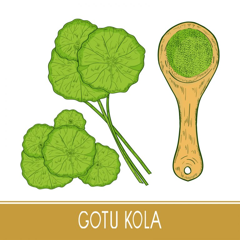 Gotu kola. Set. A plant, leaves. Spoon and powder. Sketch. Color.