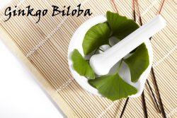 Ginkgo Biloba – drzewo o właściwościach leczniczych