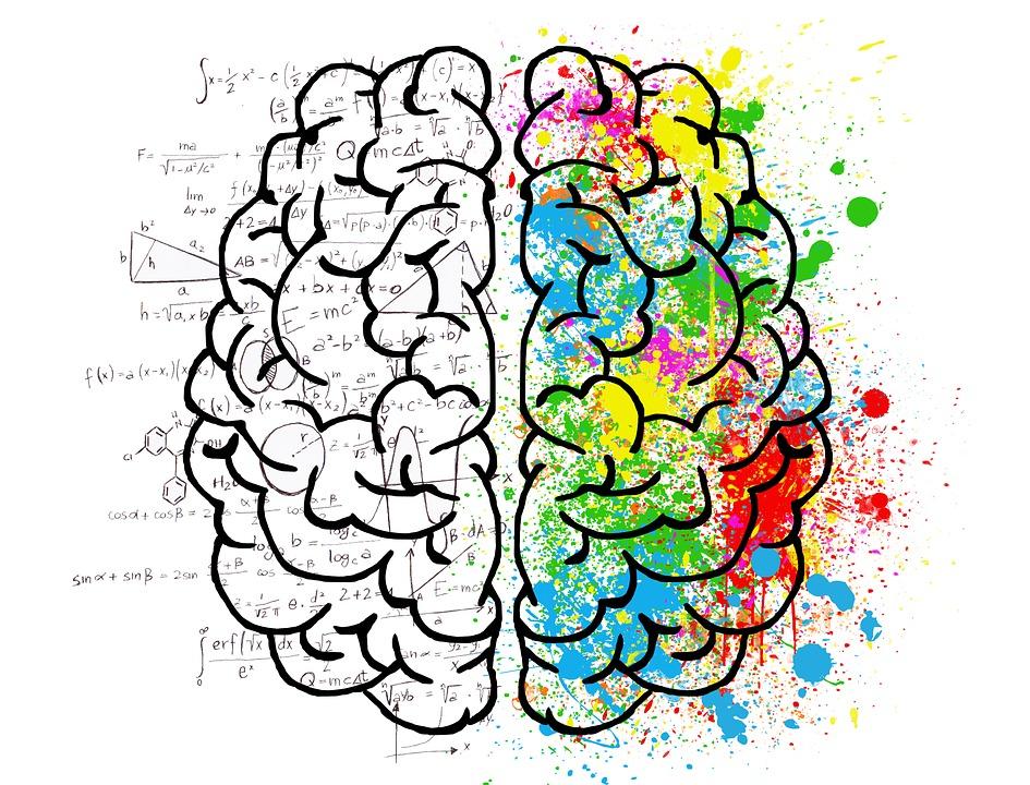 wpływ estradiolu na mózg