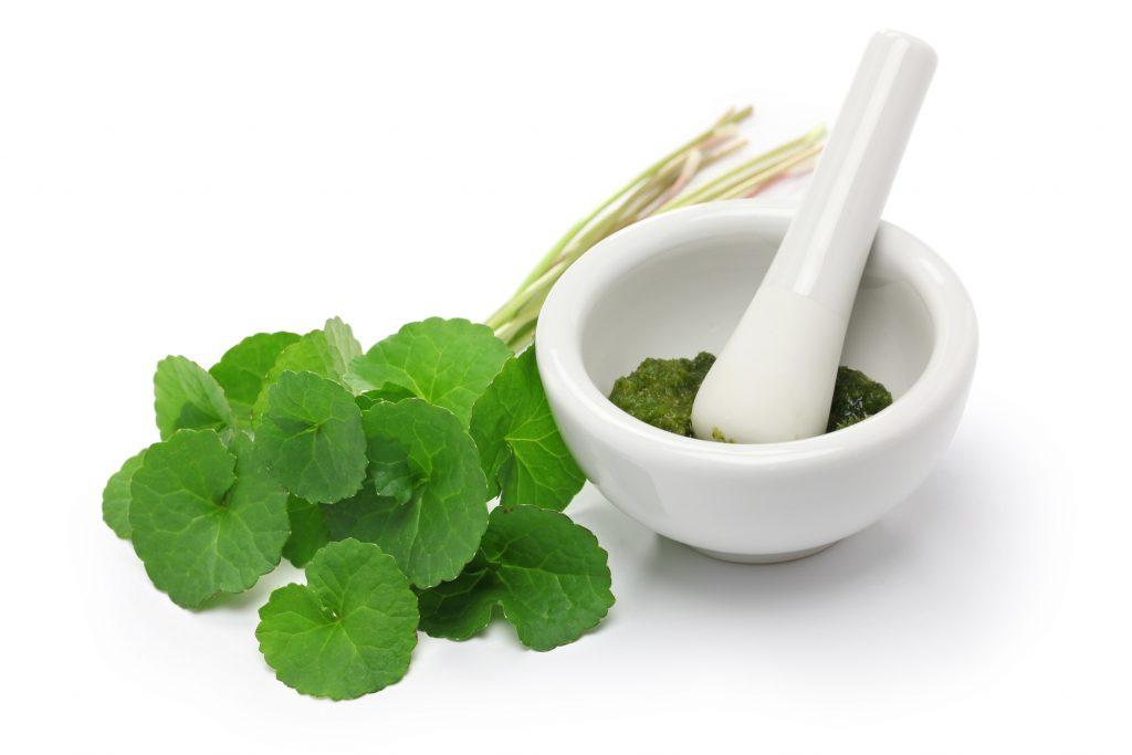 Świeże liście i ekstrakt z Gotu Koli