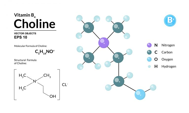 Structural chemical molecular formula and model of choline. Atoms are represented as spheres with color coding isolated on background. 2d or 3d visualization and skeletal formula. Vector illustration