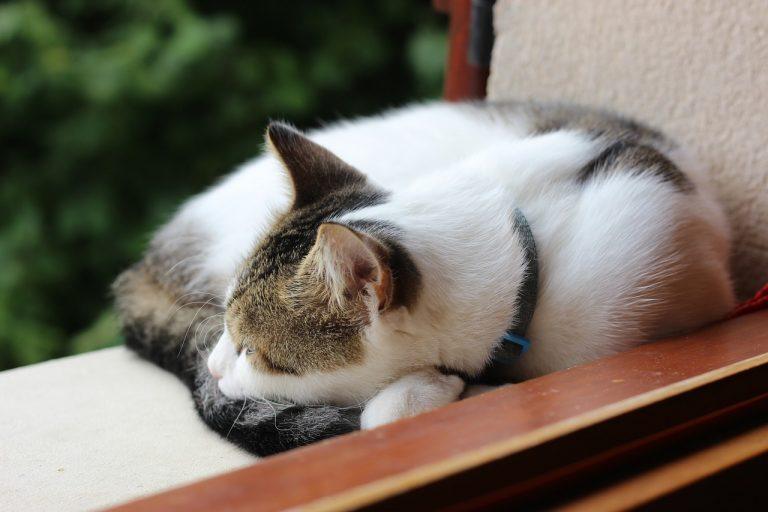 Jaka jest odpowiednia ilość snu dla mózgu?