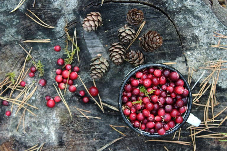 Beautiful background of cranberries. Fresh cranberries in the cup. Cranberries in the forest. Ripe cranberries on the wood. Christmas spirit and traditions. Ice cold cranberries. Christmas mood