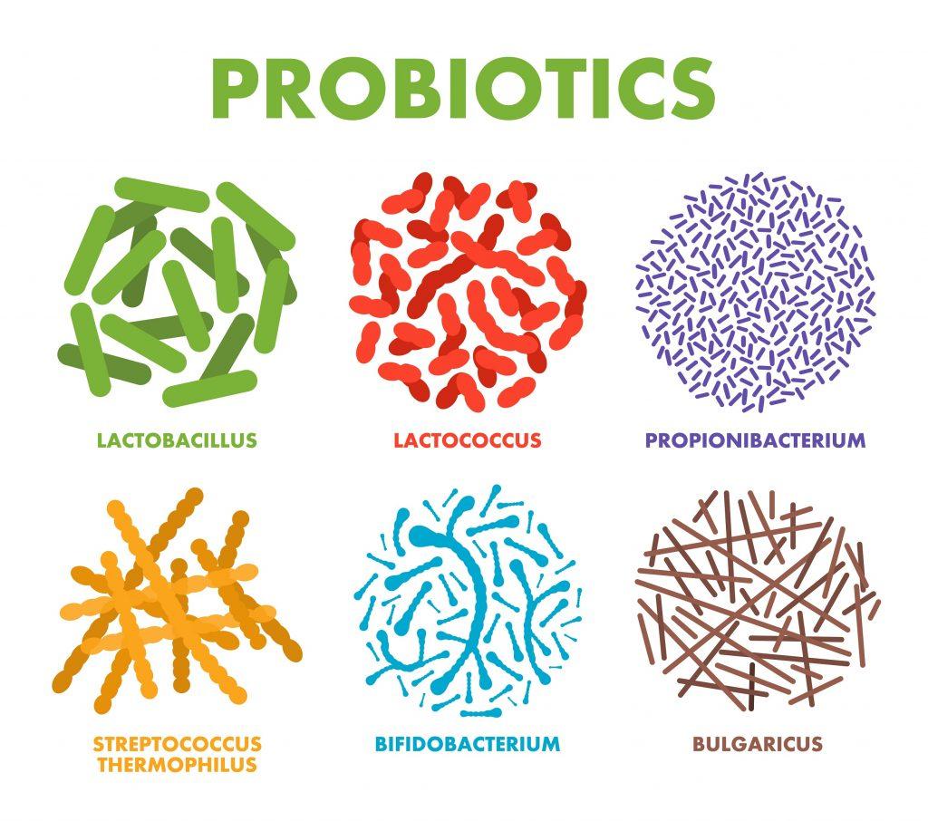 Rodzaje bakterii probiotycznych