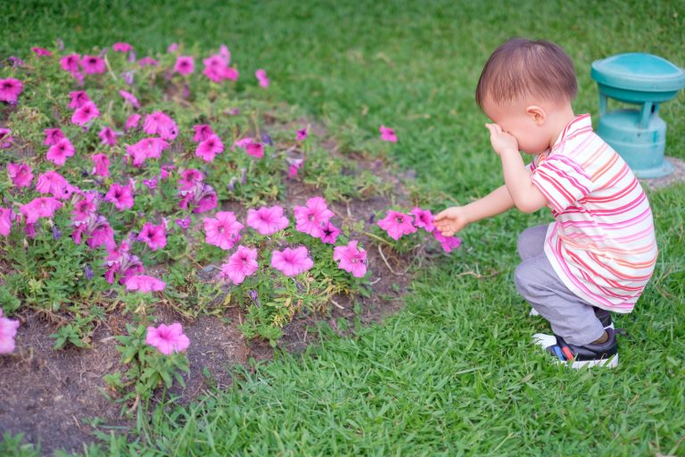 Cute little Asian 18 months / 1 year old toddler baby boy child suffer from pollen allergy at beautiful flowers garden,  little boy rubbing eyes for allergy, Kids and Pollen Allergies concept