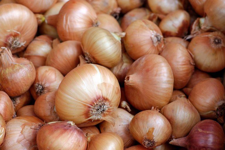 Cebula – dlaczego warto dodać ją do swojej codziennej diety?