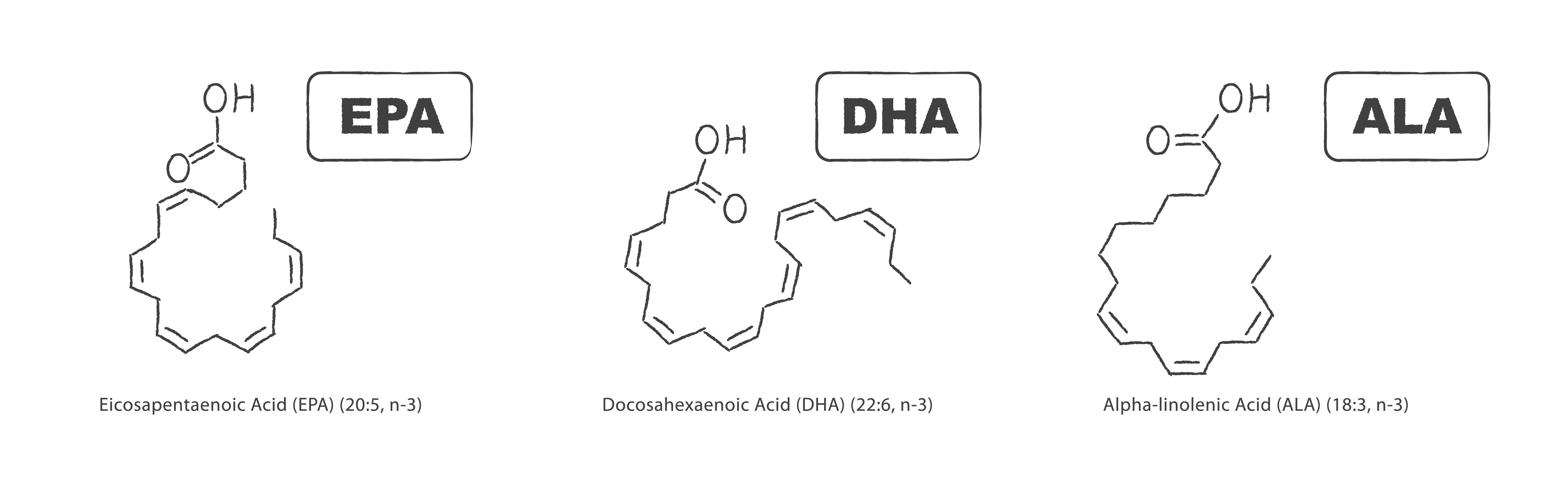 3 najbardziej popularne kwasy typu Omega 3 - EPA, DHA i ALA