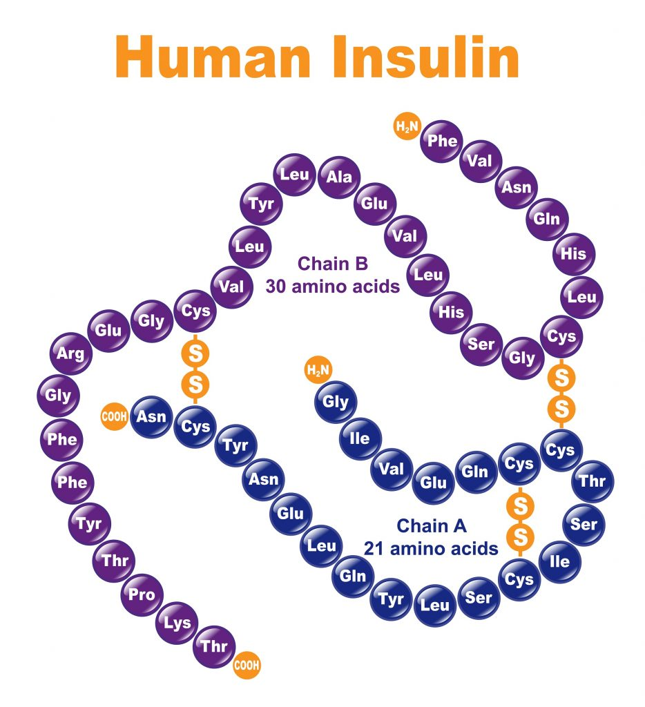 Jak wygląda cząsteczka insuliny