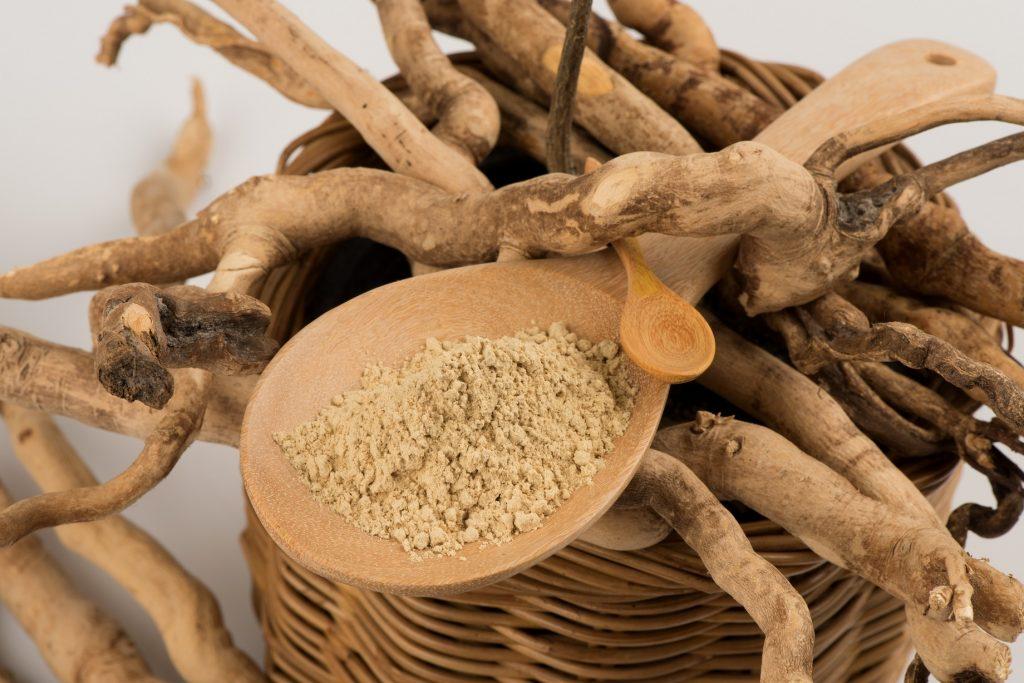 Swieży korzeń Eurycoma longifolia