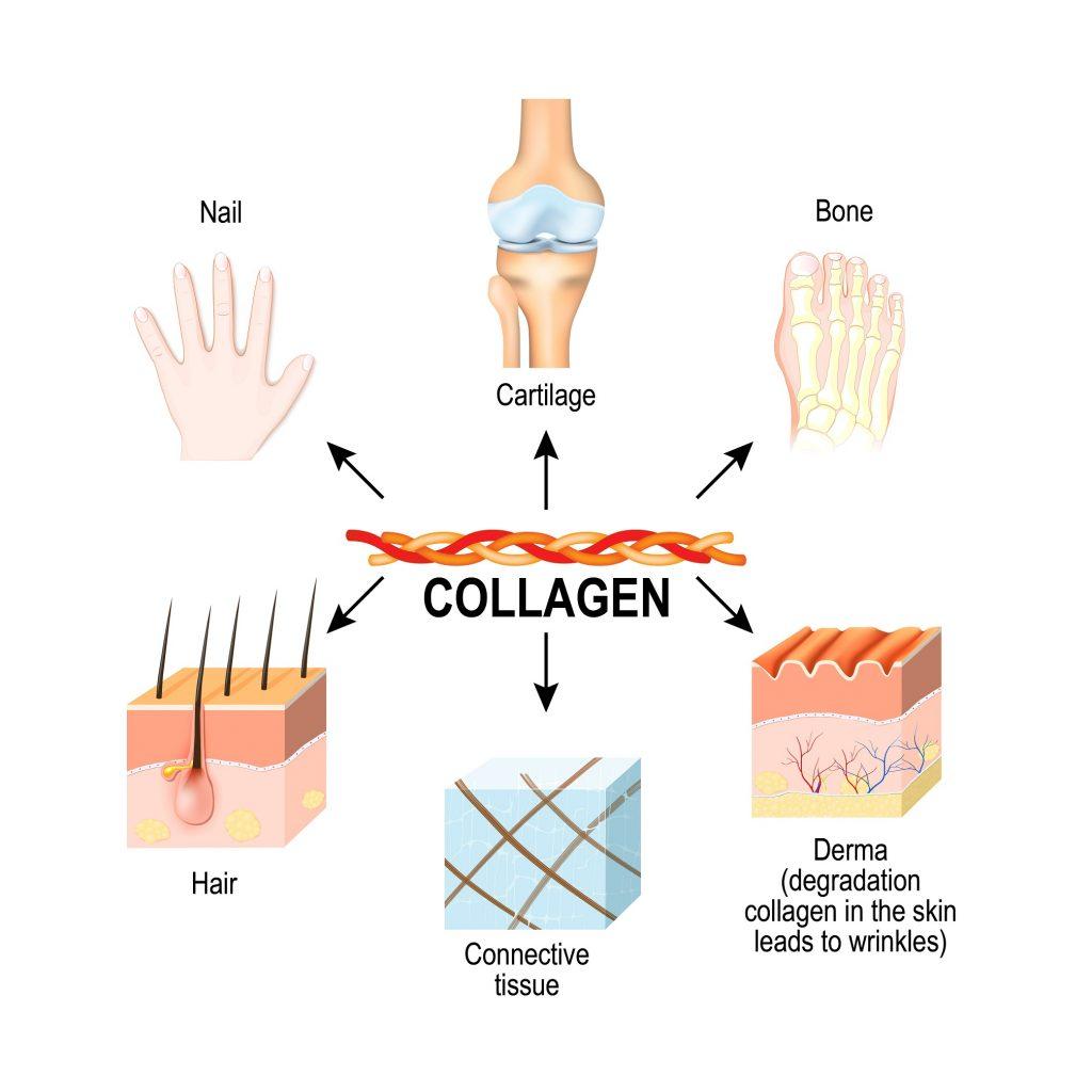 Kolagen wpływa głównie na stan skóry, oraz jej wytworów