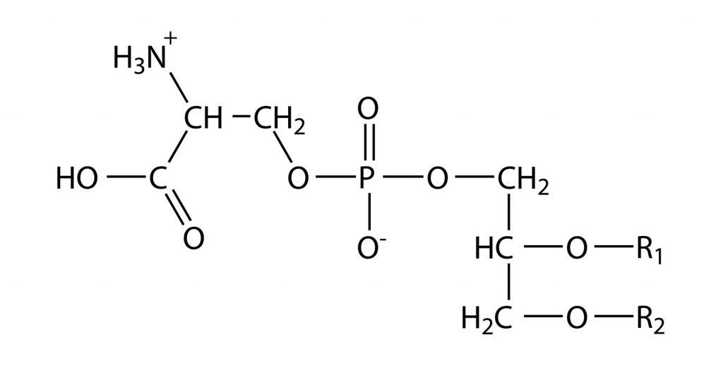 Ogólny wzór fosfatydyloseryny