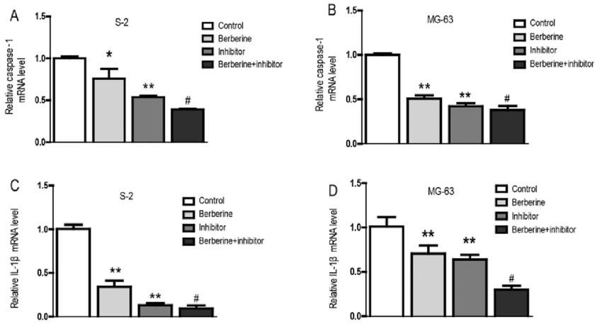 Na wykresie przedstawiono wpływ berberyny, leku z grupy inhibitorów oraz terapii łączącej te dwa składniki na aktywność komórek Kostniakomięsaka - jednego z najbardziej powszechnych nowotworów. Berberyna wspomogła zmniejszenie aktywności tych komórek zarówno sama jak i w synergii z faktycznym lekiem z grupy inhibitorów stosowanym w tym schorzeniu [Źródło: https://www.researchgate.net/publication/311821238_Berberine_affects_osteosarcoma_via_downregulating_the_caspase-1IL-1_signaling_axis]